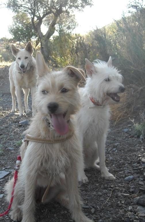 Drei ehemalige Straßenhunde  Foto: MConsoir