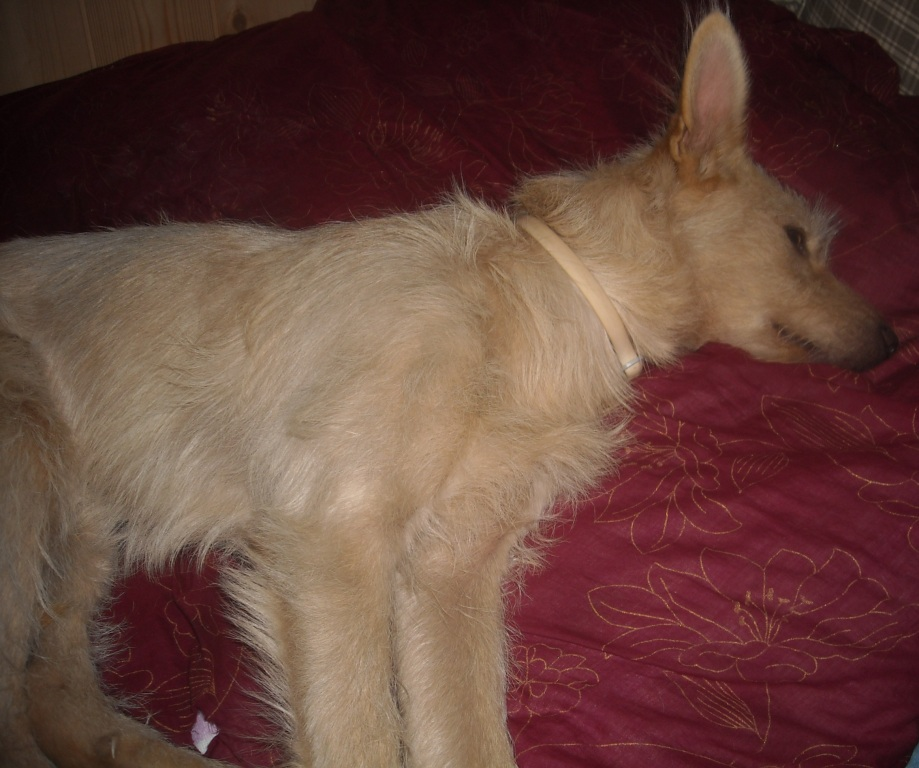wie viel schlaf braucht ein hund tipps zum thema ruhebedarf. Black Bedroom Furniture Sets. Home Design Ideas