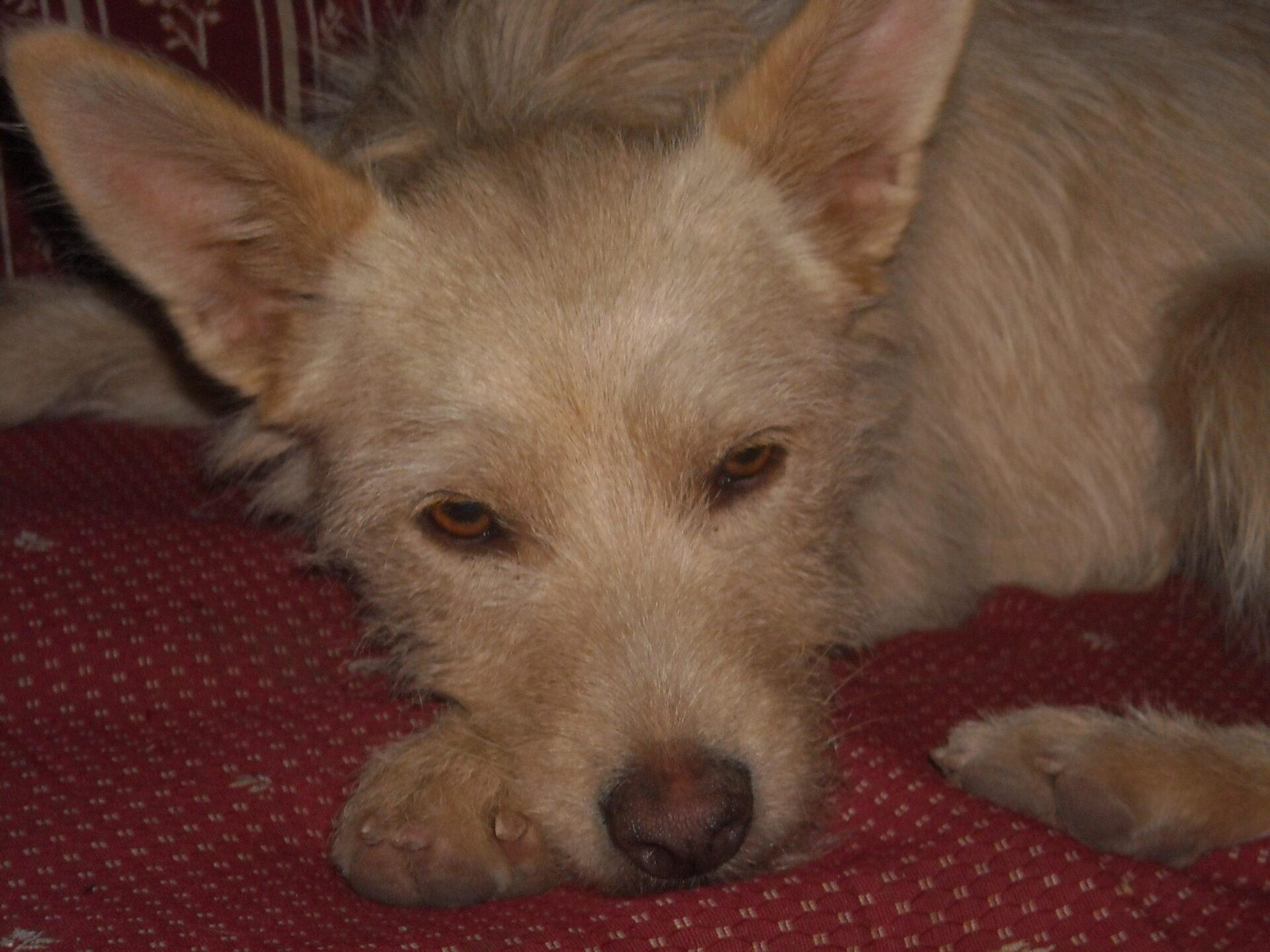 Termin beim Hundepsychologen: Der Hund auf dem Sofa?