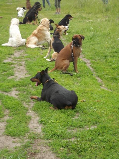 Leila beim Hundetraining Foto: W. Kranholdt