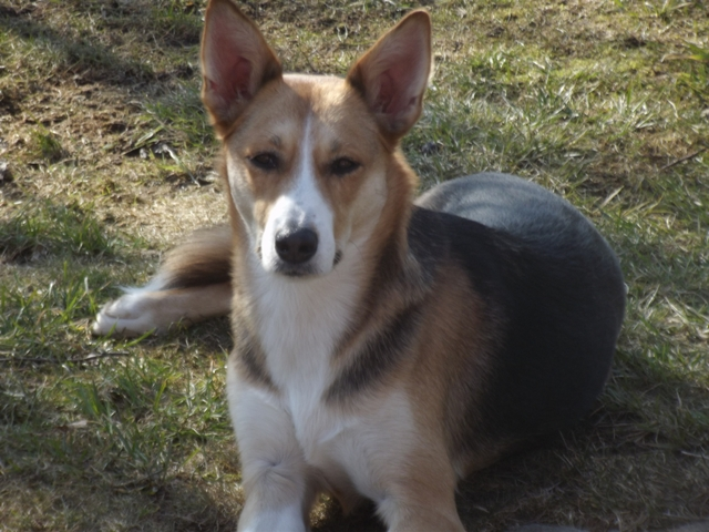 Wie bist Du auf den Hund gekommen? – Walburga Kranholdt erzählt, wie sie zu Leila kam