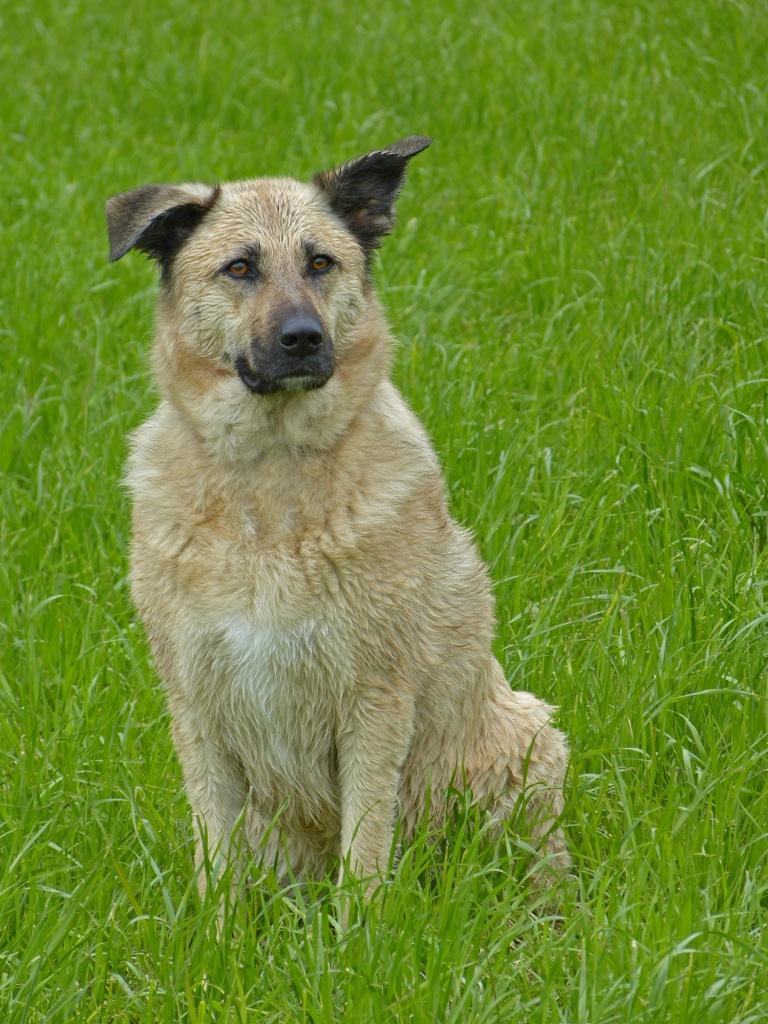 Jacki _ ein ganz normaler Hund trotz Epilepsie