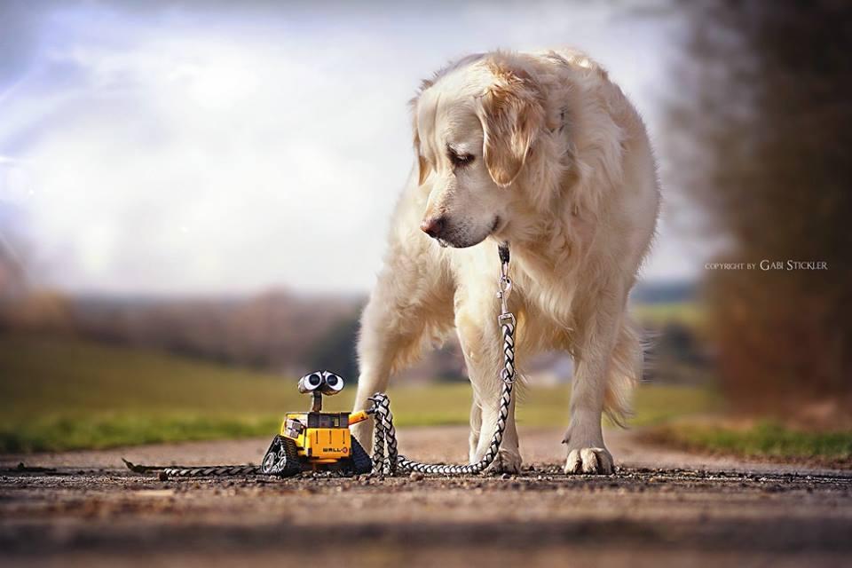 Hunde fotografieren – Tipps für gute Hundefotos
