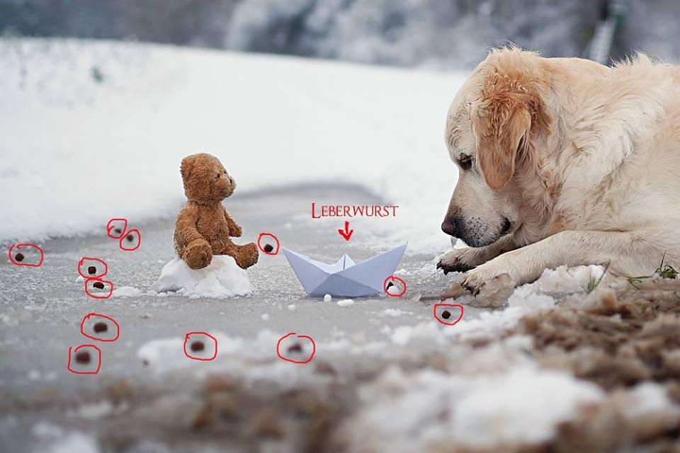 Tipps Zum Fotografieren hundefotos so könnt ihr tolle hundefotos schießen