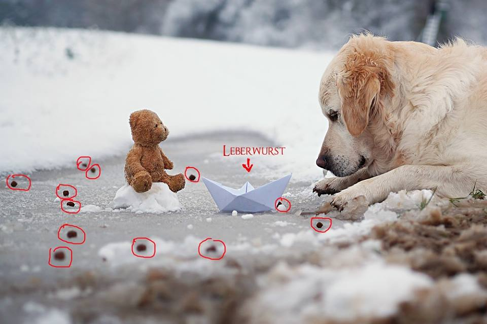 Leckerchen auslegen und den Moment abpassen, in dem der Hund auf den Teddy schaut