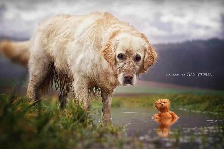 Hundefotos  So K U00f6nnt Ihr Tolle Hundefotos Schie U00dfen