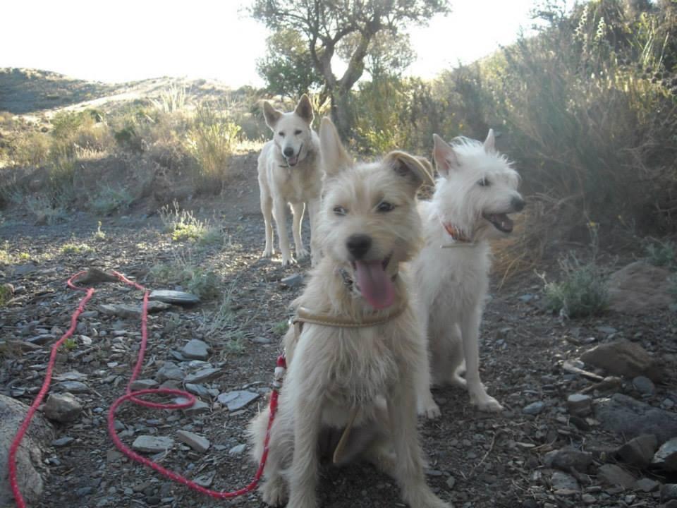 Lucky, Kimba und Emma Juni 2013