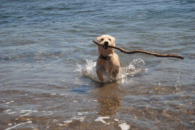 Emma im Meer