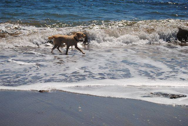 Emma marschiert am Strand