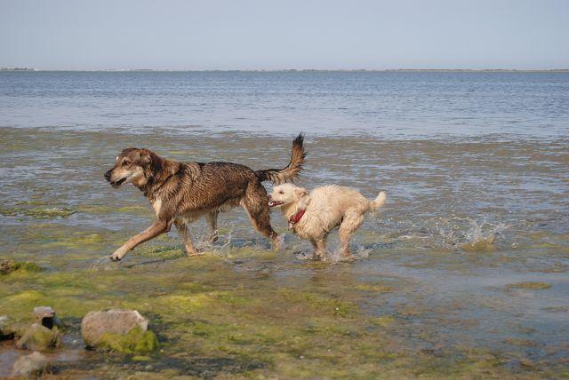Französisch-spanische Hundefreundschaft