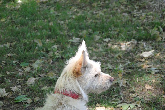 Reisehund, ganz klar :)