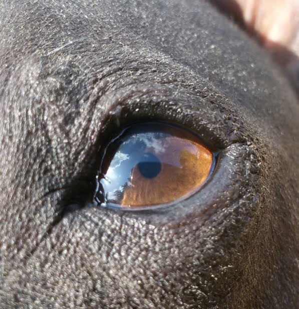 AHT Auge