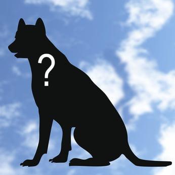 Der Hund aus dem Ausland – Vorurteile und Tipps