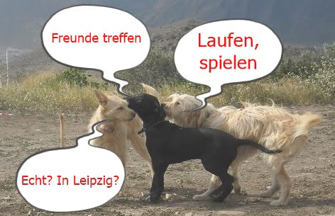 Sprechblasenbild Leipzig Dogs Award