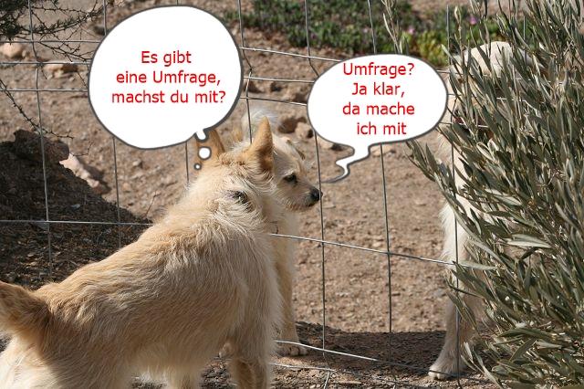 Umfrage Mein Hund Mein Coach