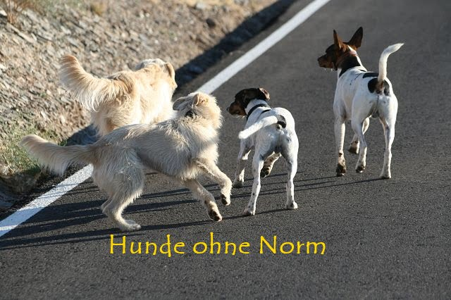 hunde-ohne-norm