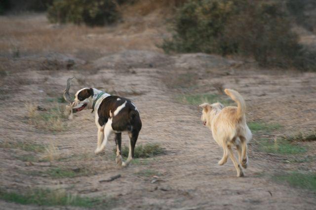 Mehr Spaß als Mensch-Hund-Team