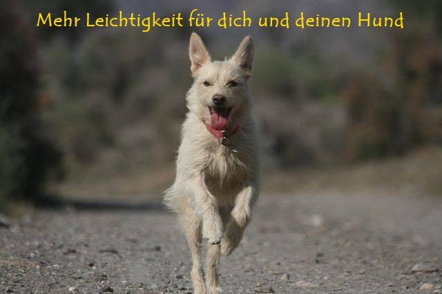 Onlinekurs für Hundehalter