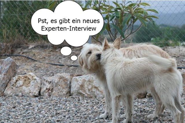 Experten-Interview mit Sabine Sernau über Ernährungsberatung für Hunde