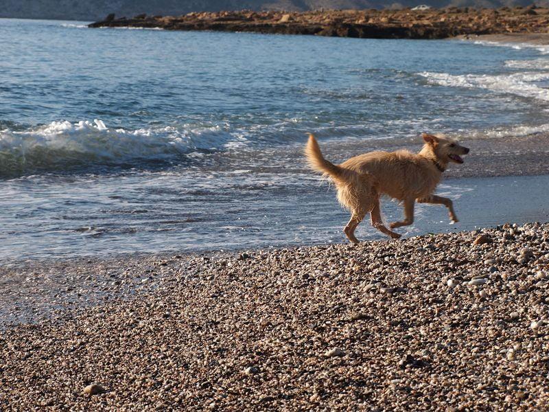 Beinbruch Hund – Erfahrungsbericht Teil 2