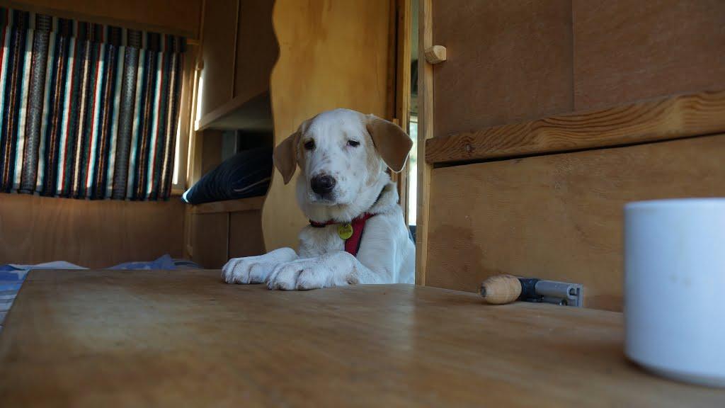 Welpen und Junghunde – Freude oder Frust