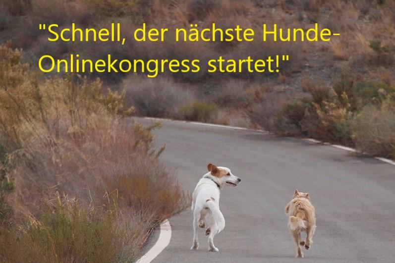 Hundekongress – Expertenwissen mit Rabatt