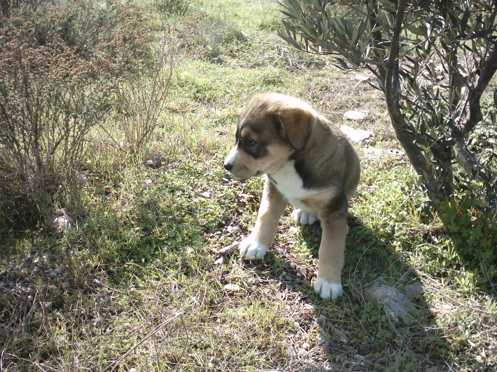 Ab wann sind Hunde stubenrein?