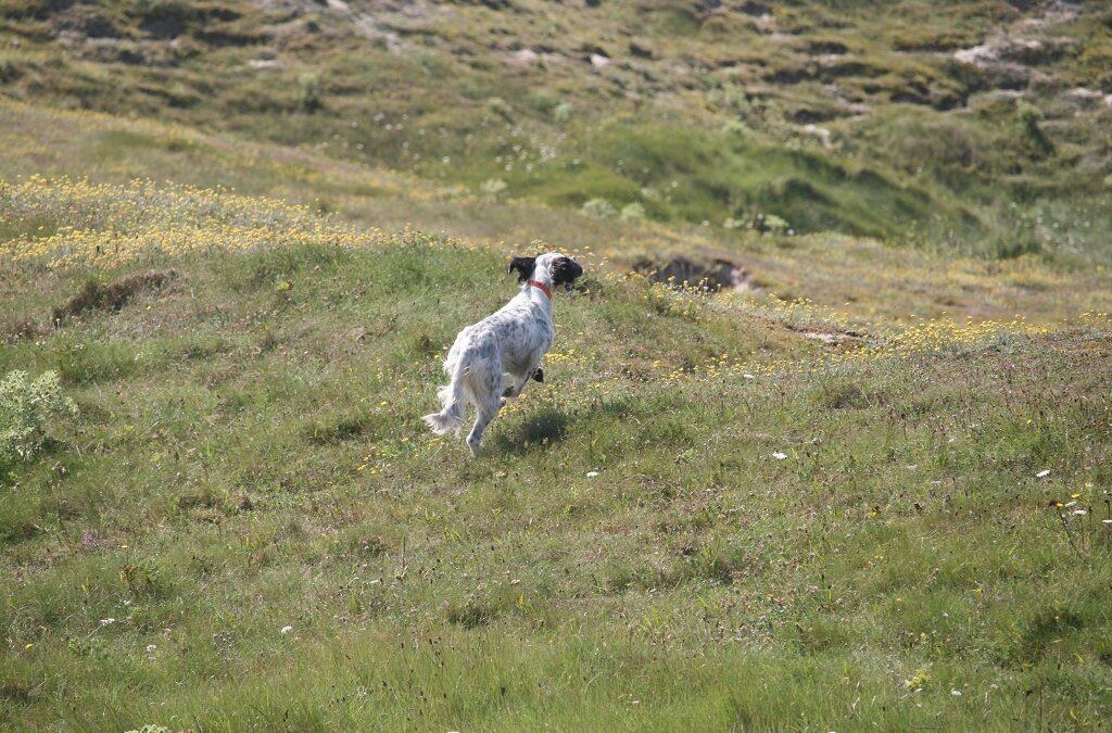 Was tun, wenn der Hund immer wegläuft?