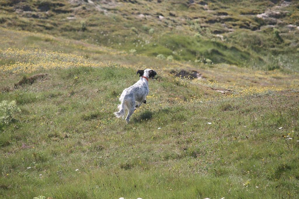 Hund läuft weg